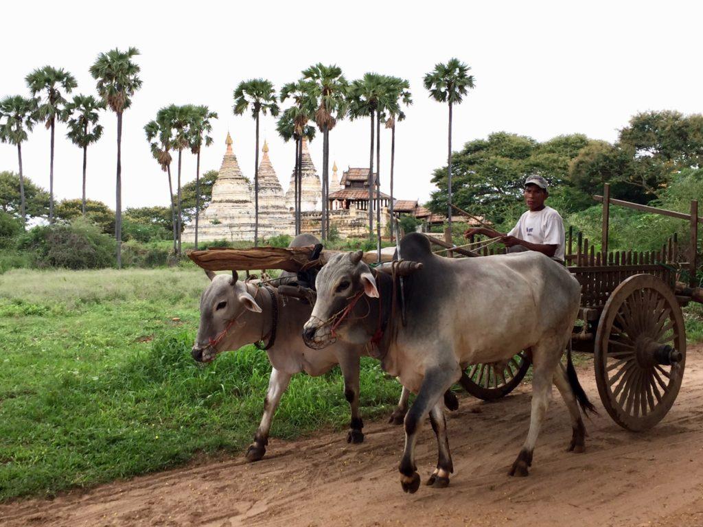 ミャンマーパガン馬車