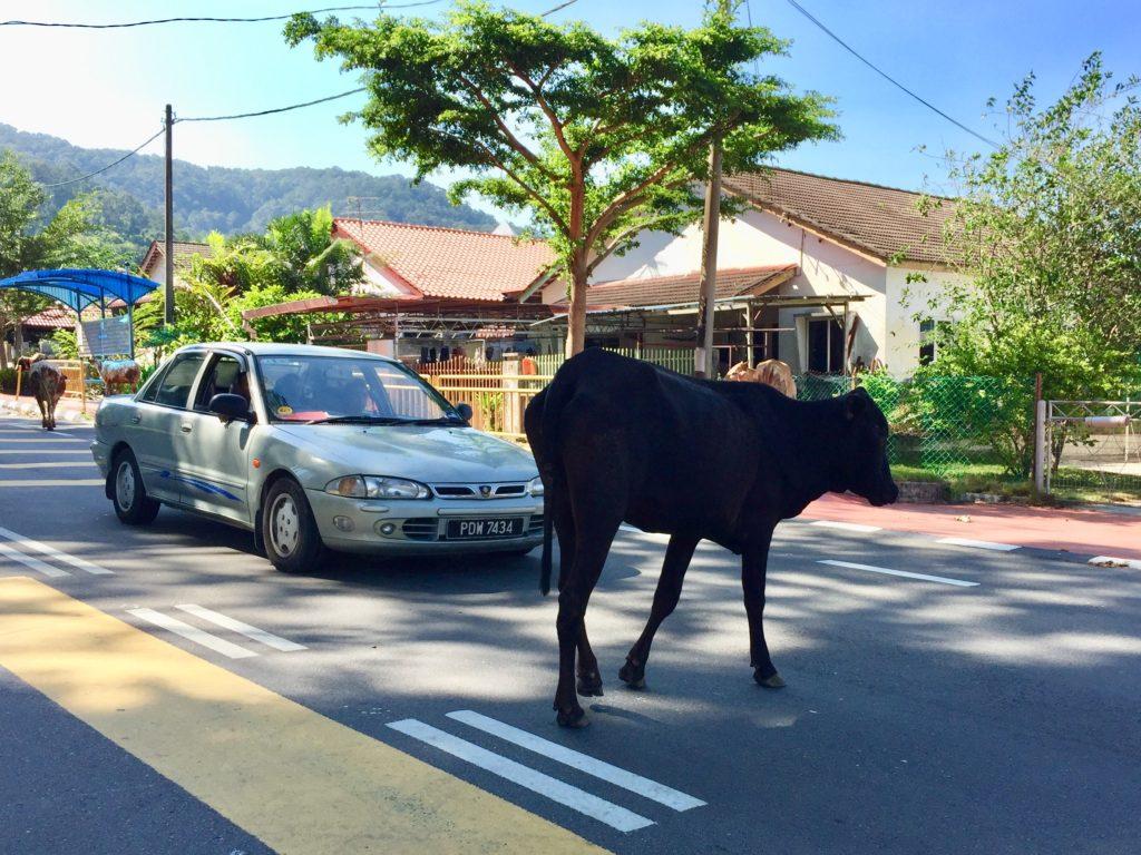 通りを渡る牛さん
